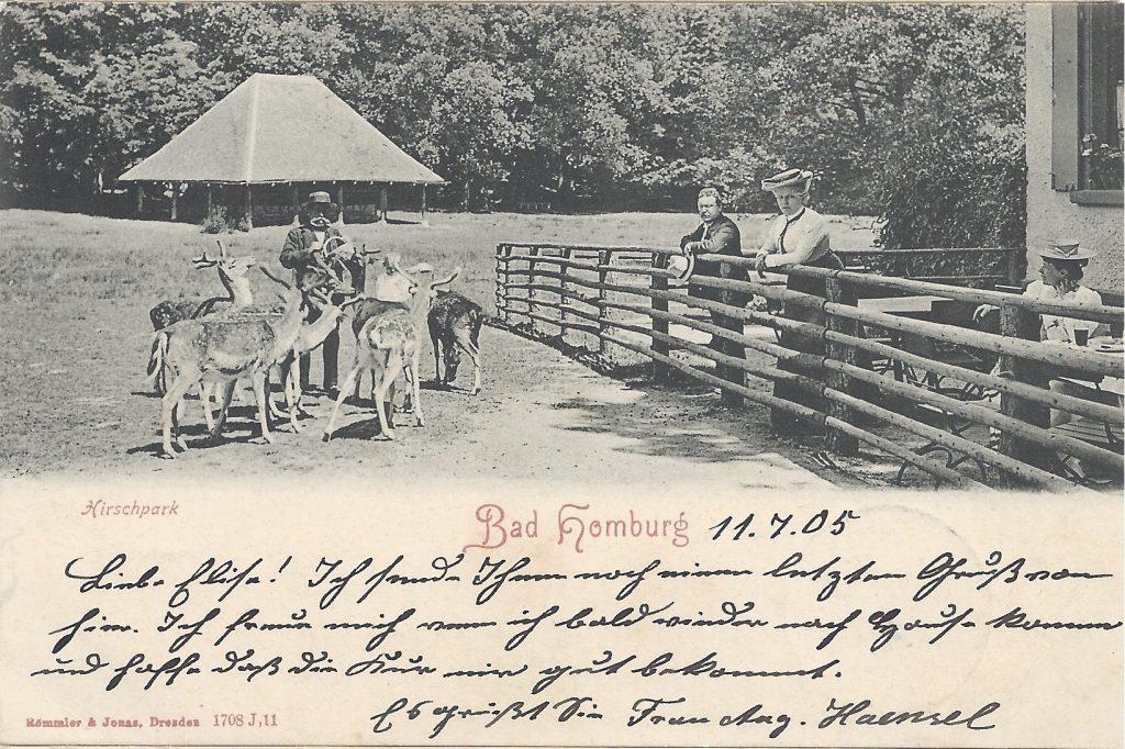 Ansichtskarte Hirschfütterung